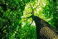 Bekijk details van Bomen