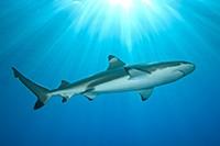 Bekijk details van Haaien