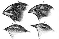 Bekijk details van Charles Darwin